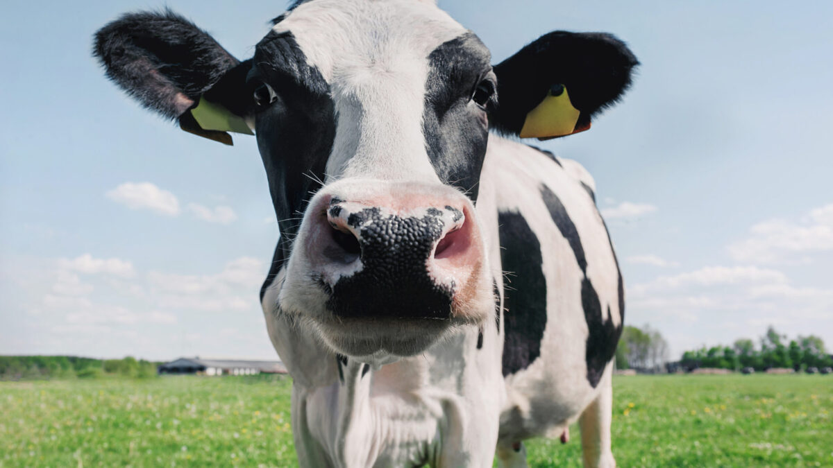 £21 million digital project to decarbonise dairy industry
